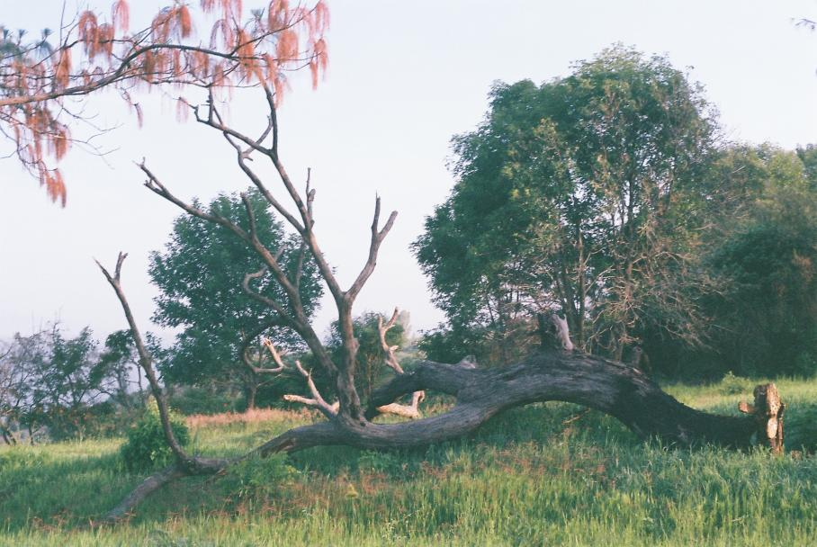 Juan Pablo Gonzalez, Visual Arts Center, photo of fallen tree in field