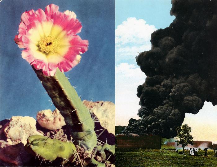 artwork by Carolina Caycedo and David de Rozas, Visual Arts Center, UT Austin