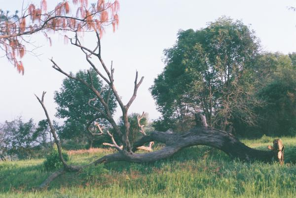 Juan Pablo Gonzalez, Visual Arts Center, photo of fallen tree in field