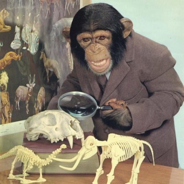 image of chimpanzee in suit holding magnifying glass and looking at fossils